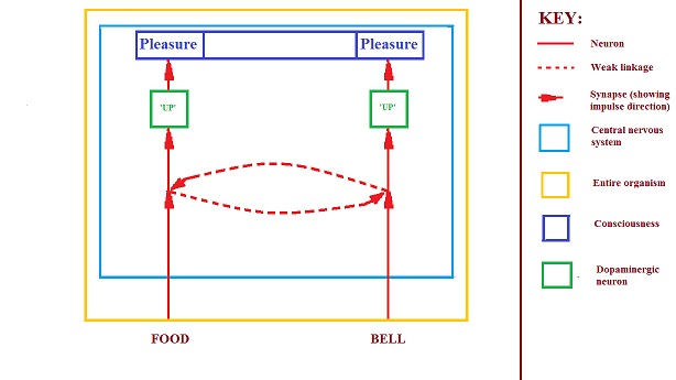 food-bell partially conditioned